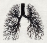 Lungs: The Tree of Life